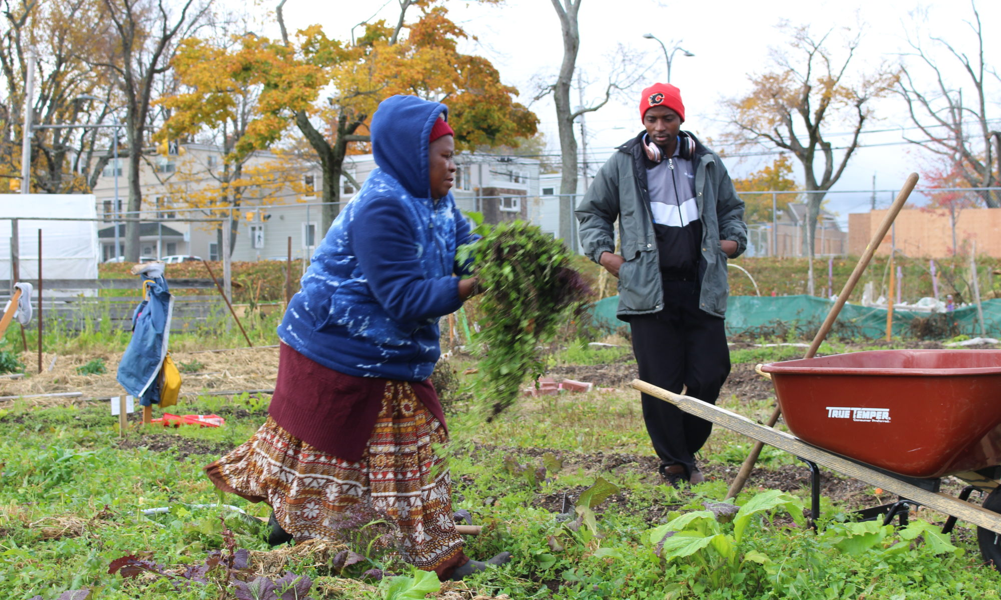 Immigrant couple tend to garden